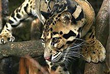 naturaleza/animales
