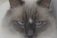 >^♥^< Here Kitty Kitty >^♥^< / by ♥ Debby Johnson   دبي جوهنسون