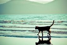 Lloviendo gatos, perros y todas las especies animales! / ¿Qué sabe el pez del agua donde nada toda su vida?- Albert Einstein. / by Arpa QualityUrbanAqua