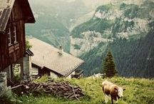 My life in the French Alps. /  When I have my home in The French Alps.... / by Laura Messenger