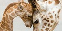 Love Cute Giraffes / Sharing the cutest giraffes in the world!