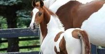Love Cute Horses / Sharing the cutest horses in the world!
