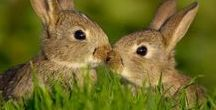 Love Cute Rabbits / Sharing the cutest rabbits in the world!