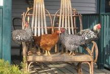 CHOOK COOP! / by Evelyn Flesher