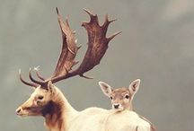 fauna / animal kingdom  / by Lindsay