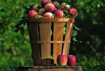 A is for Apple / Apple recipes, photos, crafts and gifts