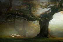 Trees / by Shani Mcgecko