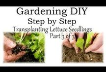 Gardening Tips DIY Videos / by Bernadette Fox