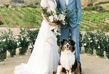 4-legged Wedding Guests