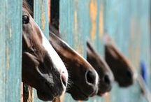 Horses  / by Hannah Crow