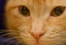 P E T S / pets cats ect / by Jesse Petersen