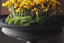 Pretty Planters & Centerpiece Ideas / by Joanne Dimeff Interiors