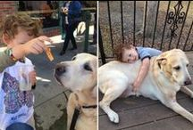 Labradors and Children / Does it get any better than Labradors and Children? I think not. The Cutest Labs and Kids inside. / by It's a Lab Thing