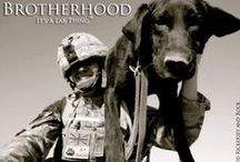 Military Labradors / Military Labradors MWD, live to sacrifice so we can have the things we need. Soldiers and Labradors, Brotherhood Bond. / by It's a Lab Thing