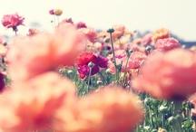 {FLOWER}