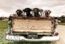 The Showcase: Labrador Photography / by It's a Lab Thing