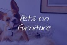 Pets on Furniture / by Cymax