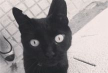 Ràpita Felina - Gats - Gatos -Cats / Ràpita Felina - Gats - Gatos -Cats https://www.facebook.com/rapitafelina