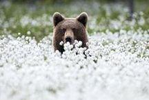 Fleur: Animal Adoration / by Fleur