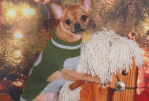 Chihuahua Love / by June Johnsson