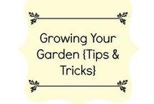 Growing Your Garden {Tips & Tricks}