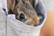 Bunnies / by Shannon Tieu