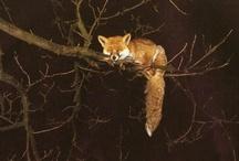 Foxes / by Debra