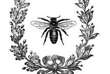 The Bee's Knees / All things bees, beekeeping, honey, wax and wings!  / by Trish Givens