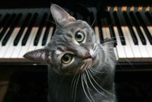 Cats... NOT the musical / Cat overload! / by Donya Lane