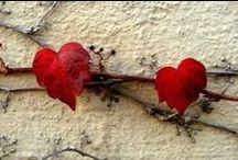B E...M I N E   / Valentine's, hearts, crafts....oh my!  / by Erin Mitchell