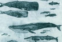 inspiratie walvis