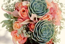 succulent wedding / Gold, peach, mint and turqoise. Salmon beauty rose and succulen. Burlap.  / by Sabina Gasparic
