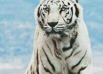 17 - Our World - Animal Kingdom