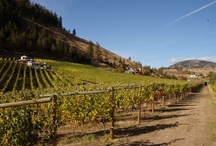 Wineries and Vineyards