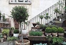 Terrasse, Balkon und Co. / Ideen und Inspriationen für den Garten – insbesondere zum Thema Container Garden / Topfpflanzen für Draussen . Container Garden Inspirations