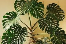 Urban Jungle / Plants and gardening