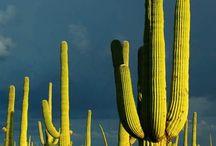 Desert Survival / Desert Survival