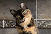 Cats / Cats.  Big or small, we love them all.  Especially Tortie's and Bengals! / by Charles