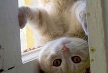 Animals: Cat Love!  / by Teri G.