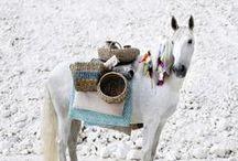 zoo - horses ...