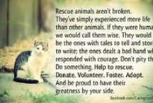 Helping Animals / Each of us can make a difference, whether it's through adoption, fostering, education, rescue, volunteering or sharing missing pets. How can you help? Stop by your local shelter and ask what they need, organize a day for your family to volunteer, collect old sheets and towels, hold a bake sale or photo event to raise funds for a humane society, sign up to walk shelter dogs, etc. There are so many ways! #volunteer #lendapaw  / by Local Delmarva