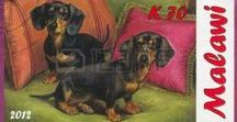 Doxies / Dachshunds
