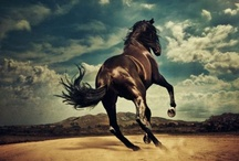 un Cheval / Used to ride horses quite often, nowadays... *sigh* scarcely ever. well, if anything, they are still magnificent animals and I can look! / by Lindsay Lovejoy