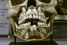 Some call it creepy... / Oddities, anatomy & other strange things I fancy...