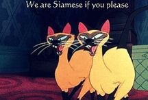 We Are Siamese If You Please / by Katie Luque