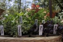 Miracle-Gro Inspiration Board