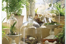 Under glass / Cloches, bell jars and cloches vignette ideas / by Jen Rizzo