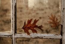 Autumnal Equinox / by Elisabeth Dingivan