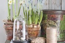 Botanical inspiration / by Jen Rizzo