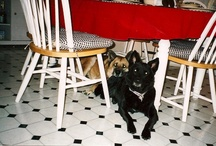 dogs & four legged furry creatures that I love! / by Tracey